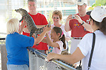 A Young Visitor Holding An American Alligator
