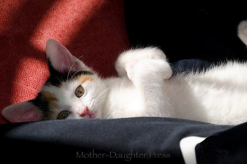 Kitten lying on her back in the sun ray
