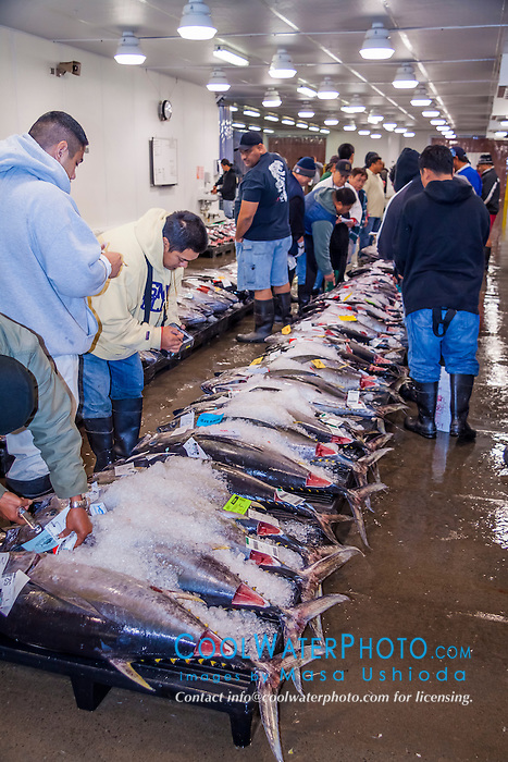 Ahi or bigeye tunas at honolulu fish auction masa for United fishing agency