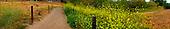 OLYMPUS DIGITAL CAMERA Panaroma of field and sky