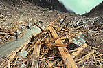 "This is a so-called ""alternative logging operation"" by Macmillan Bloedel from 1991. The company issued a press release stating that this was an example of ""World class alternative logging,"" ""The best that we can do."""
