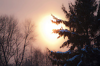 Photo of Backlit Snowy Trees at Sunrise