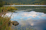 Idaho, North, St. Maries. Reflections of sky in a roadside pond with rustic barn in early autumn.