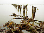 Old pilings, Astoria, Oregon, USA