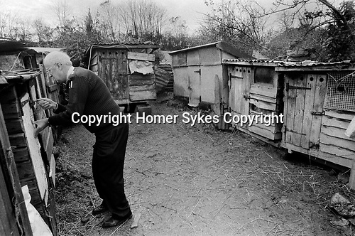 Puppy Farming Wales 1989. RSPCA inspector Peter Anderson checking on puppies in their breeding hutches hardly any bigger than a rabbit hutch at dairy farm in the small village of Blaenycoed / Blaen-y-coed. Numerous puppies were found in dirty unsafe and unhealthy conditions, with little water and pens covered in excrement. Some still feeding from their mothers other big enough to stand on their back legs and look forlornly out of their prison cages.