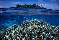 """The largest purchase to date for the Nature Conservancy is the Palmyra an atoll situated about 300 miles north of the equator.  Palmyra has five times as many coral species as the Florida Keys and three times as many as Hawaii.  It is home to the world's largest invertebrate, the rare coconut crab, and a population of red-footed booby birds second only to that of the Galapagos.  It is the last marine wilderness area left in the U.S. tropics and is home to the last remaining stands of Pisonia grandis beach forest in the world.  Palmyra was a US Navy supply base in World War II, the site of a proposed nuclear waste dump, an unsuccessful coconut plantation and of various development schemes.  Palmyra is most famous for the 1974 slaying  of a married couple which became the subject of the best-selling book """"And the Sea Will Tell,"""" by Vincent Bugliosi."""