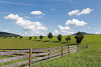 A fence line in Madison County, VA. Photo/Andrew Shurtleff