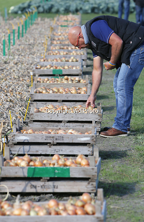 Foto: VidiPhoto<br /> <br /> WARMENHUIZEN - Een bezoeker controleert vrijdag de kwaliteit van de uien-van-de-toekomst bij veredelaar Bejo in het Noord-Hollandse Warmenhuizen. Tot en met zaterdag zet een van de grootste groenteveredelaars van ons land zijn deuren open voor relaties, klanten en publiek uit de hele wereld. Het groentezaad (meer dan 1000 rassen) van Bejo wordt jaarlijks naar meer dan 100 landen wereldwijd ge&euml;xporteerd. Zowel veredeling als productie is verspreid over diverse landen.