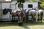 A groom prepares horses before four in hand coaching event in Locust, New Jersey.