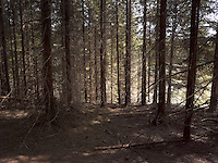 FOREST_LOCATION_90006