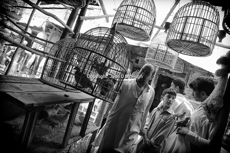 Kabul's ancient bird market, 23 August 2012. (John D McHugh