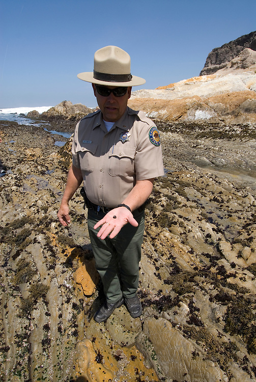 California, San Luis Obispo County: Montana de Oro state park offers scenic coastal views and tide pool exploring.  Ranger showing tide pool life, small shellfish..Photo caluis187-71243..Photo copyright Lee Foster, www.fostertravel.com, 510-549-2202, lee@fostertravel.com