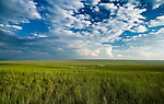 A small farm settlement in the vast grasslands of northeast Inner Mongolia.