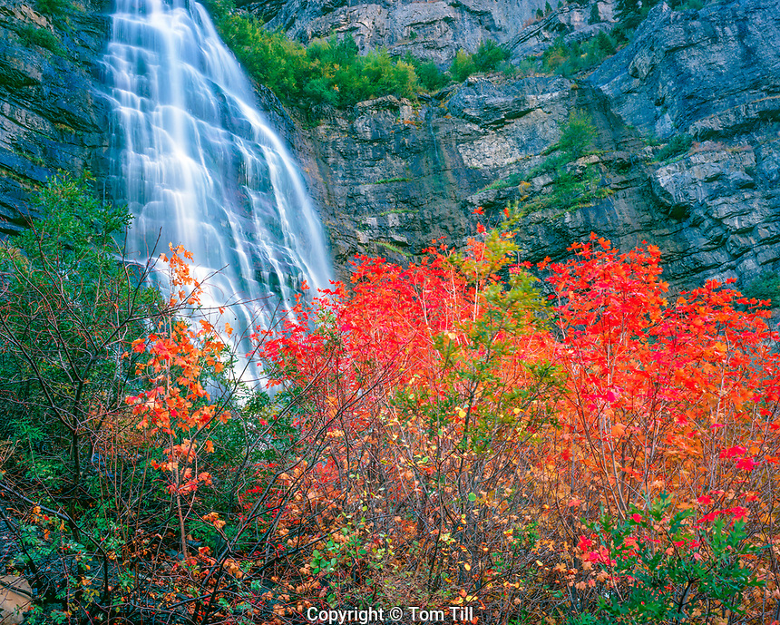 Bridalveil Falls and Maple, Provo Canyon, Wasatch Mountains, Utah