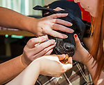Paw Fund -- Pet Vaccination Clinic -- Antioch, California -- September 7, 2014