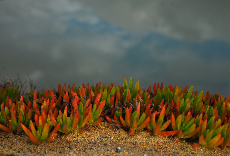 &quot;TERRARIUM&quot;<br />