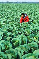 Cabbage Farmer, New Jersey, Agriculture.Released: Derek (no problem).Phil Degginger