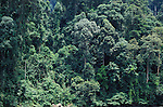 Rainforest Trees showing different heights, Danum Valley, Sabah, jungle treetop, edge of river.Borneo....