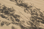 Shadows of creosote bush, Larrea tridentata, on sand.  Algodones Dunes, Imperial County, California