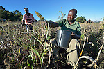 Henry Gwese is a farmer in Charumengwe, Zimbabwe. His legs were paralyzed by cerebral malaria. Yet he continues farming, using an appropriately designed and fitted wheelchair provided by the Jairos Jiri Association with support from CBM-US. Accompanying him is his wife, Nhaume Makavire.