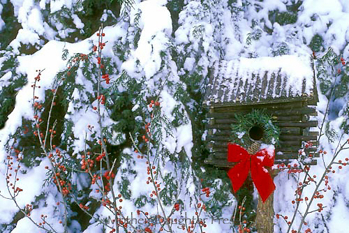 Log cabin birdhouse decorated for winter with wreath and red bow set near evergreen and holly berries, Midwest USA