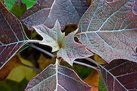 Close up of leaves.
