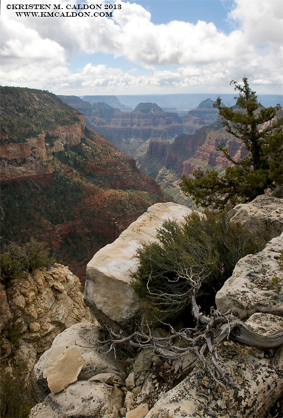 The Widforss Trail on the North Rim of Grand Canyon has superb forest walking with massive views of Transept Canyon.