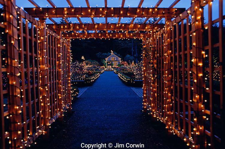 Christmas Outdoor Lights