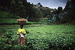 An unidentified woman carries a basked with vegetables on February 16, 2003 in a rural area close to Gotovo, Rwanda. About 800.000 Tutsis and moderate Hutus were killed in one hundred days in 1994. About 100.000 prisoners accused of the genocide are still in prison awaiting trial. Rwanda is currently trying to cope with these huge problems and some prisoners that confessed to crimes are tried in village trials, known as Gacacas. (Photo by: Per-Anders Pettersson)