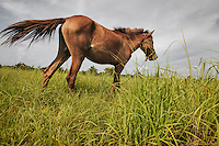 A horse at an open field of Karuni, Southwestern Sumba.