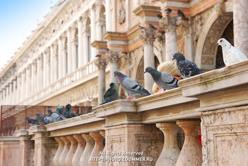 Pigeons on St. Mark's Square Archaeological Museum