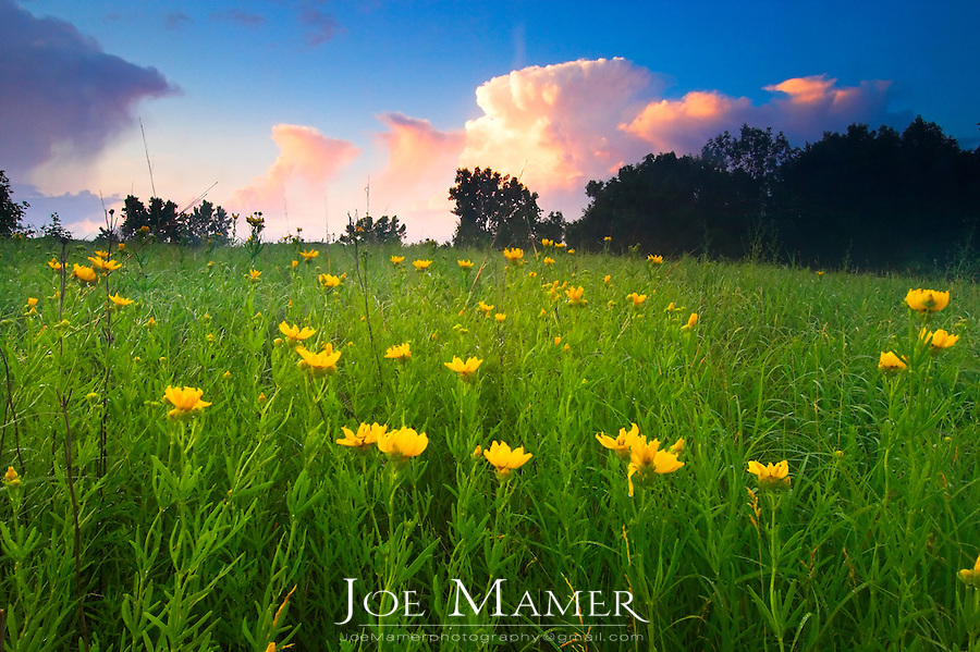 Wild flowers on Minnesota prairie with passing thinderstorm clouds.