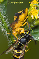 Ambush Bugs,  Assassin Bugs