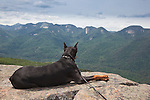 Doberman laying on summit of Noonmark Mt