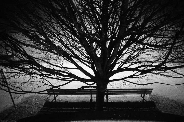 A large tree with spread out branches at night with a park bench.