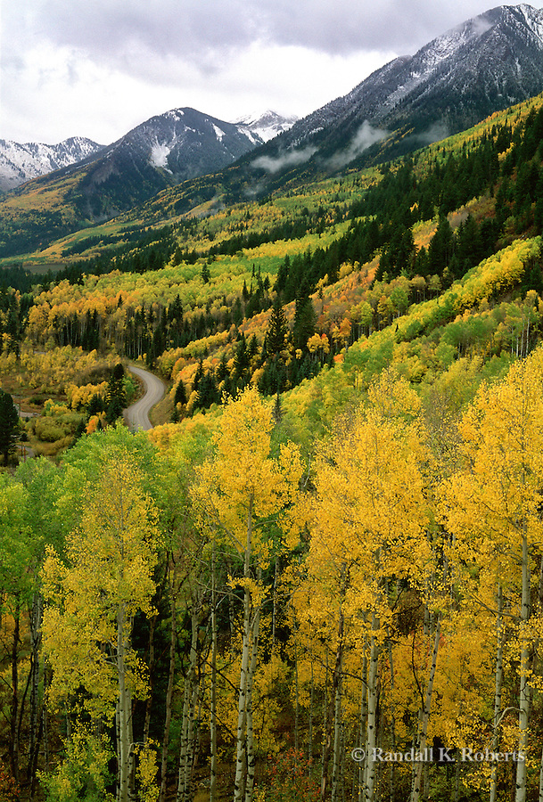 Aspens light up the hillside near McClure Pass, Elk Mountains of Colorado.