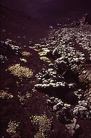 ISLANDA: paesaggio vulcanico. Sassi e rara vegetazione sulla terra marrone scuro.