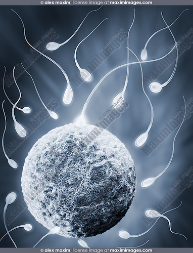 Sperm reaching human egg, conceptual 3D illustration