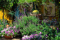 A courtyard of containers planted with mixed summer flowering perennials and bedding plants, succulents and cactii Ochra.