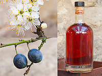 3 stages of sloe gin made from Prunus spinosa: flowers, blue berries, bottle of sloe gin alcohol made from the berries, food preservation