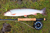 Catch and release trout fly fishing in Sunnudalsa river Iceland Beautiful colors on a big Arctic char.