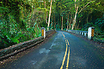 Jungle canopy along the Old Mamalahoa Highway, Hamakua Coast, The Big Island, Hawaii USA