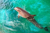 Hybrid Cetaceans