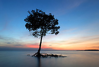 Silky water moves around a mangrove tree at sunset across from Comer Key in the Florida Everglades and the ten thousand islands near Chokoloskee in Collier County, Florida. Photo/Andrew Shurtleff