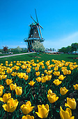"""The Dutch windmill """"De Zwaan"""" on Windmill Island in Holland, Michigan, a 240 year old working windmill during the Tulip Festival."""