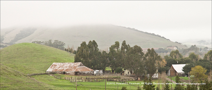 Sonoma pastureland in winter fog