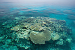 Coral reef in the far northern outer Great Barrier Reef on an exceptionally calm day.