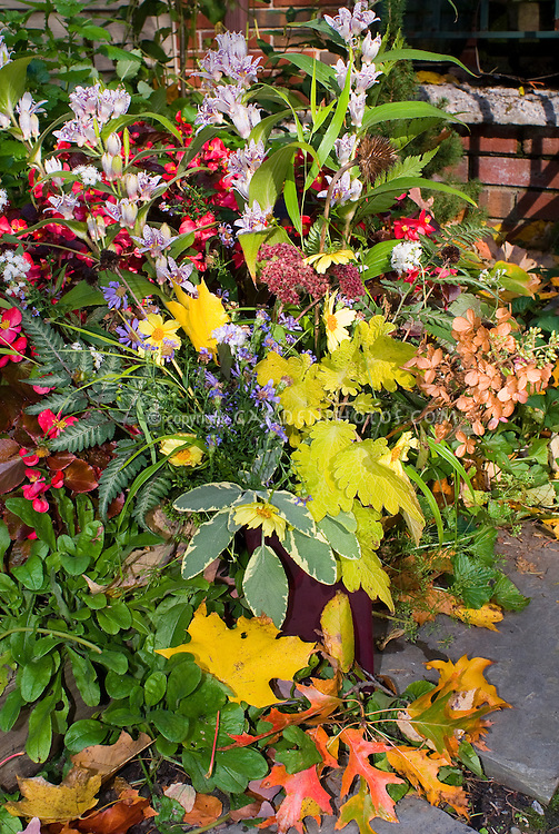 Fall flowers and foliage plant flower stock photography - Planting fruit trees in the fall a garden full of vigor ...