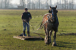 A young draft horse gets a workout on a January day, glistening with sweat as he pulls his owner on a wooden sled.