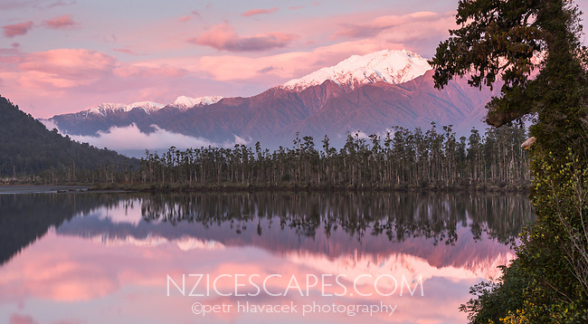 Sunset at Lake Wahapo near Whataroa with kahikatea grove and Mt. Adams in background, Westland Tai Poutini National Park, UNESCO World Heritage Area, West Coast, New Zealand, NZ